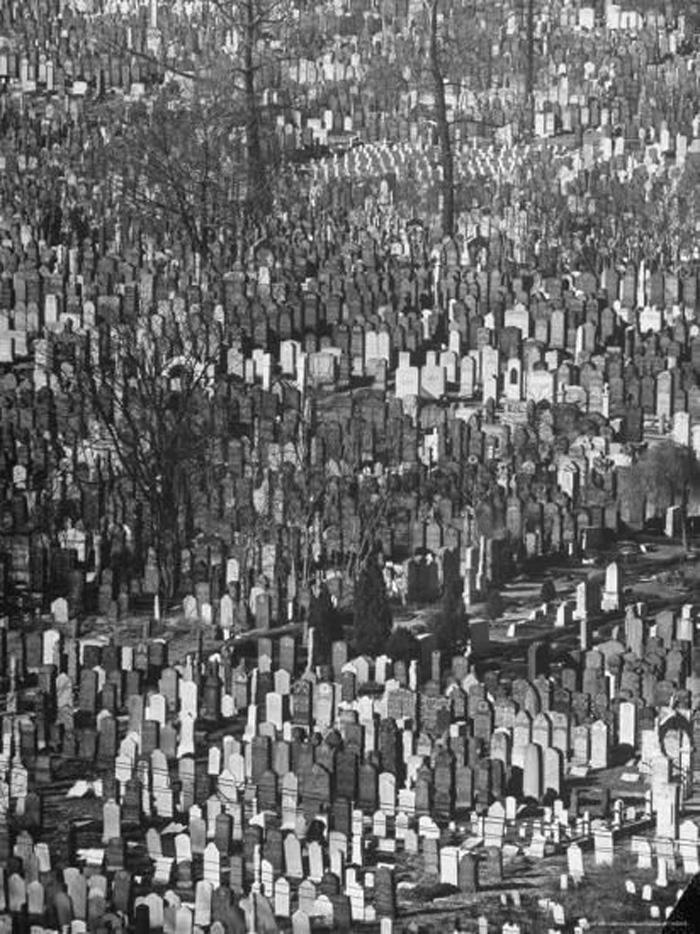 Masses of Tombstones in Cemetery in Queens
