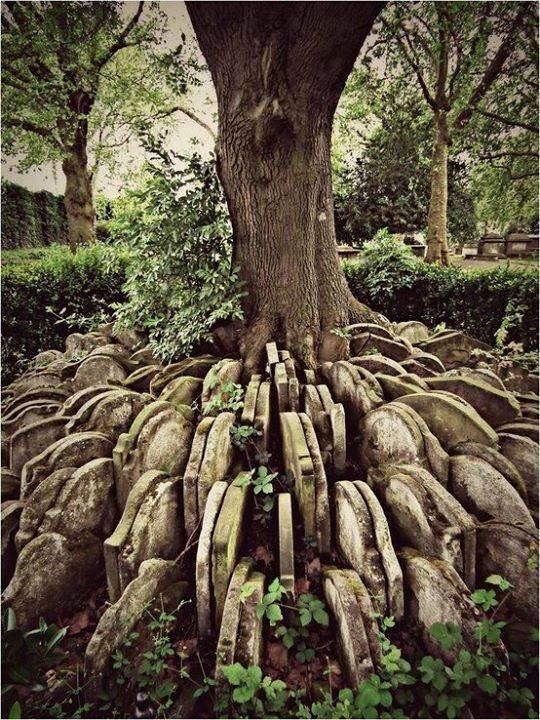 The Hardy Tree in London
